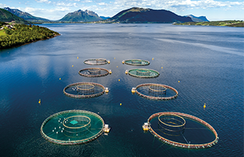 Chile Salmon Farm